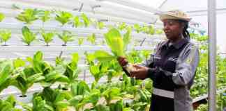 Sibongile Cele left her accounting job at Deloitte to start the Mcebo Wealth Rooftop Farm.