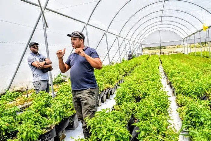 CEO and Founder of Herbal View Hydroponics, Basil Williams on his 2 hectare land at Donkerhoek Farm in Simonduim.