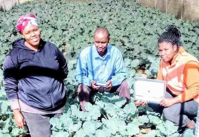 Senzushintsho Community Development Project Cooperative consists of 5 farmers who grow six types of lettuce, broccoli, kale, cabbage, pepper, tomatoes, potatoes, spinach, spring onions and beetroot.