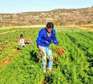 Siphesihle Kwetana (25) on her 85 hectare farm in Qumbu Eastern Cape.