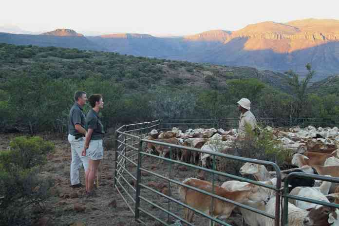 Herding Academy manager Johan Bouwer and assessor Sarah Cromhout chat to herder Chris Martins at last light over the mountains near Graaff-Reinet.