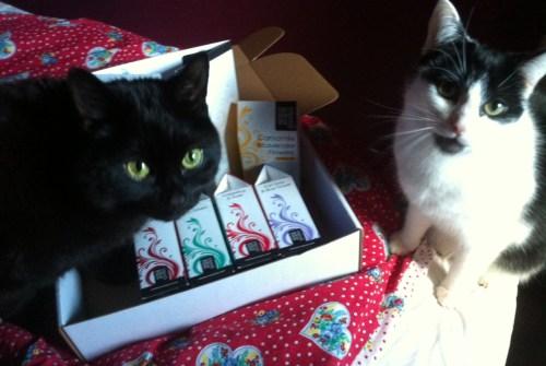 tea loving cats