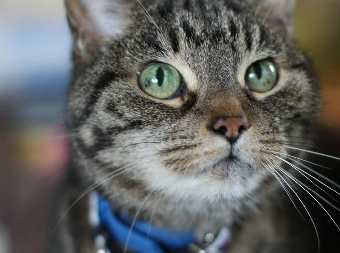 Maison de Moggy: Cat Cafe opening in Stockbridge, Edinburgh