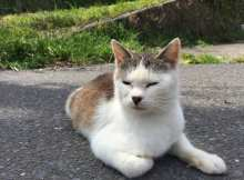 Japan Travels: Ishinomaki and Cat Island