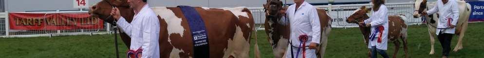 What makes a Supreme Champion cow???