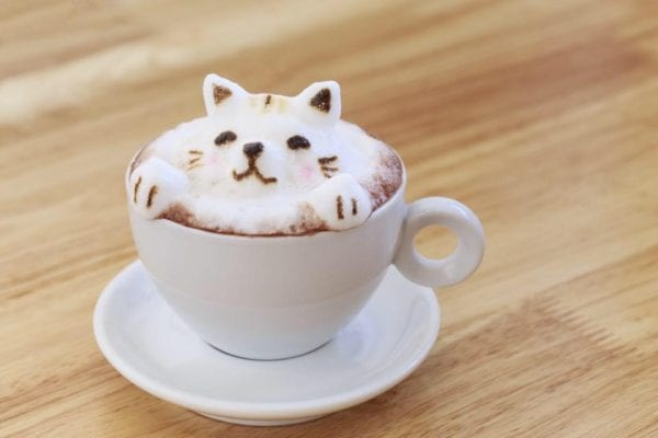 Cat cafe Glasgow