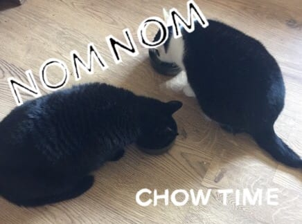 Gourmet cat soup Review