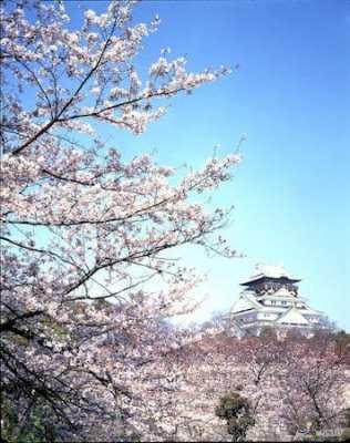 sakura japan