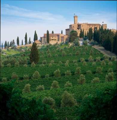 Malmaison Tuscany wine