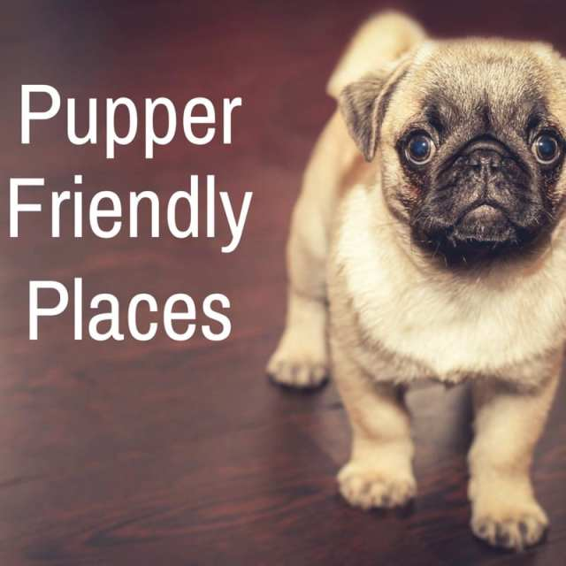 dog friendly pup puppy pupper doggy doggie foodie explorers