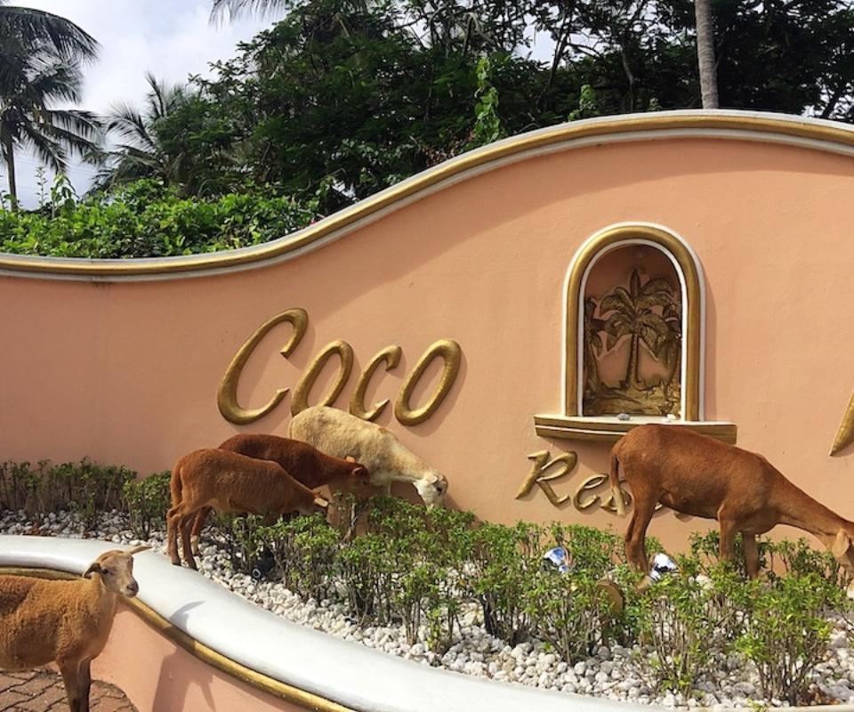 coco reef tobago review