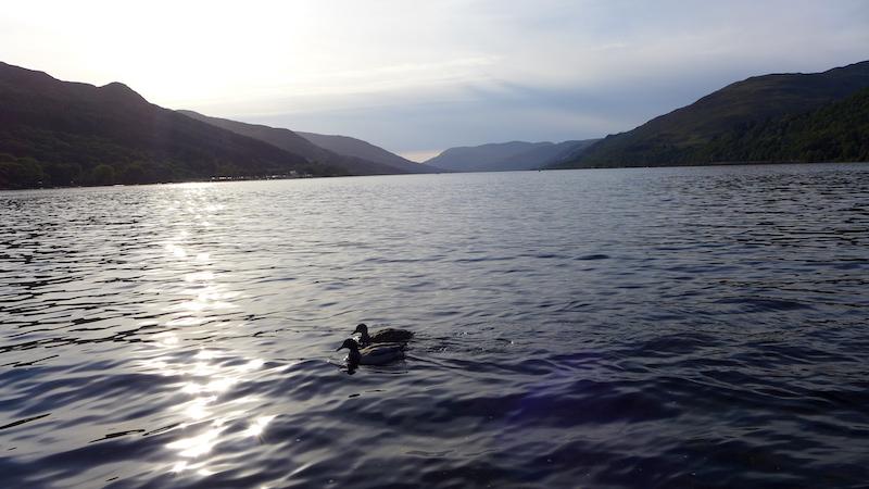 Loch Earn with ducks