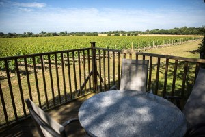 Tinwood-vineyard-2