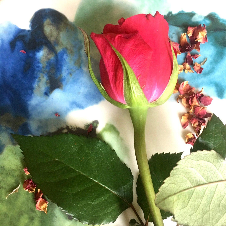 Valentines rose Maureen Clark recipes