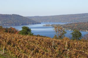 Vines-at-Keuka-Lake-300x199