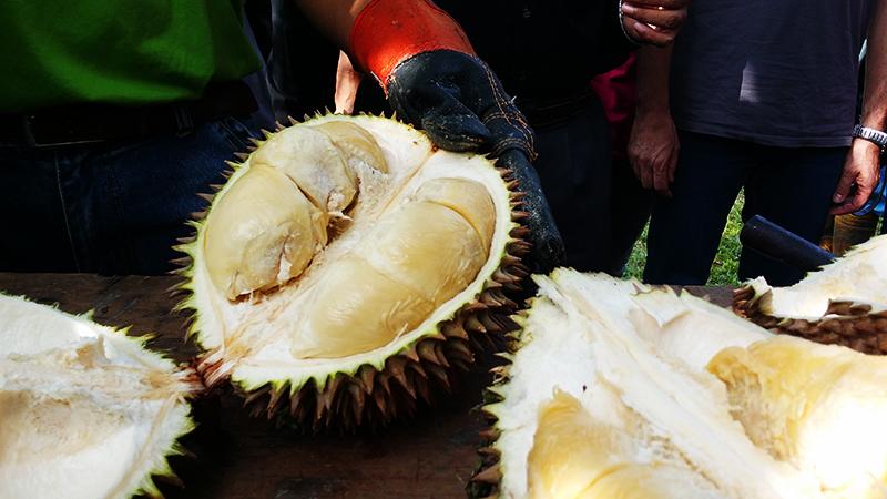 Tour & Eat Durian at Farm by Durio Tourism MARDI Kuala Kangsar