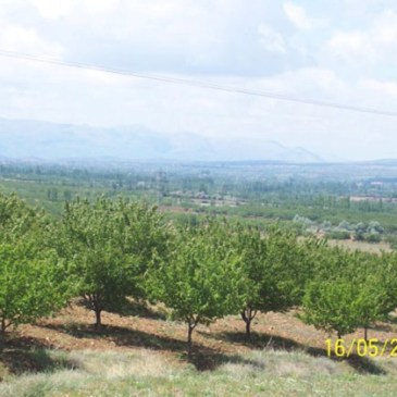 dried apricots, 2016 crop news 28-29 March