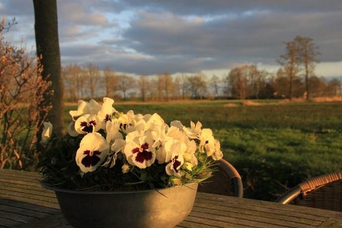 Rustig uizicht vanuit ons vakantiehuis in Friesland