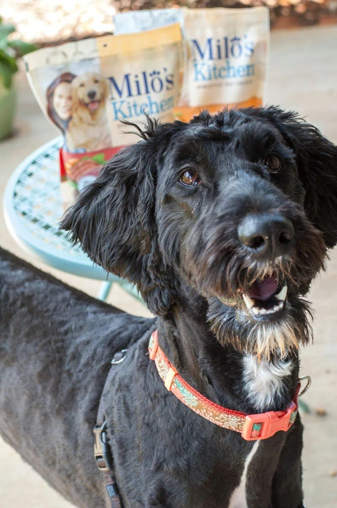 dog with dog treats