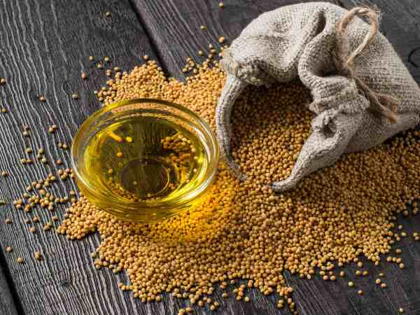 Grain mustard in a linen bag and mustard oil in a glass bowl. It is used in dietary and healthy nutrition, cosmetics, herbal medicine. The source of vitamins and polyunsaturated fatty acids
