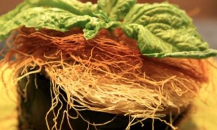 Melenzana in pasta kataifi