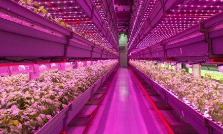 Vertical farm : Chicago all'avanguardia