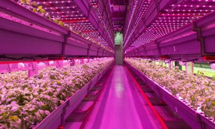 Vertical farm : Chicago all'avanguardia