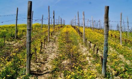 CANTINE A NORD OVEST 2017. Vino, degustazioni e turismo firmati Slow Food