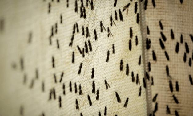 AgriProtein, 105 milioni per investire negli insetti
