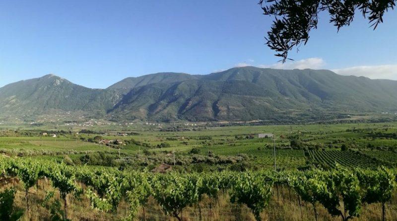 I vini del Sannio guardano ai mercati d'Oriente: missioni in Cina e Taiwan