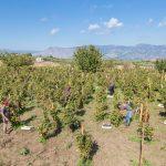 Firriato, Azienda dell'anno per la sostenibilità