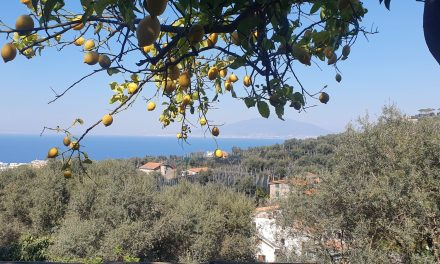 L'Azienda Agricola Marino Marzano a Sorrento