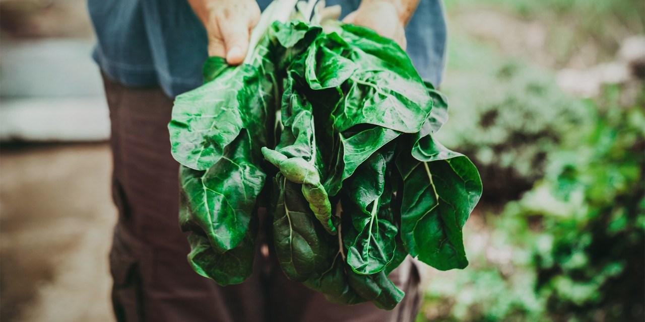 Made in Nature spinge la frutta e verdura made in Italy