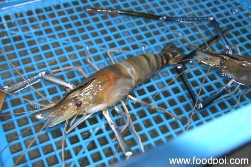 lim-aik-chew-fresh-water-prawn-15
