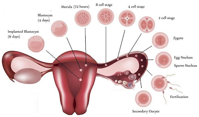Light Bleeding Means Pregnant | Decoratingspecial.com