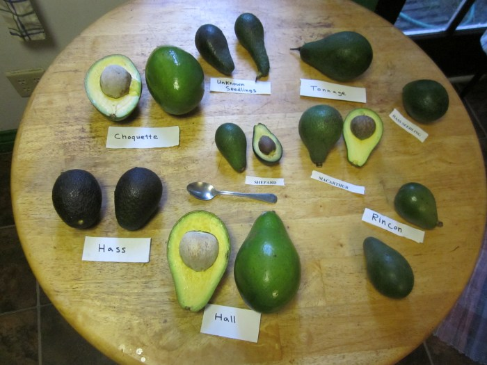 Know Your Avocado Varieties And When They're In Season - Food Republic