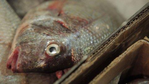 Fish-Close-Up