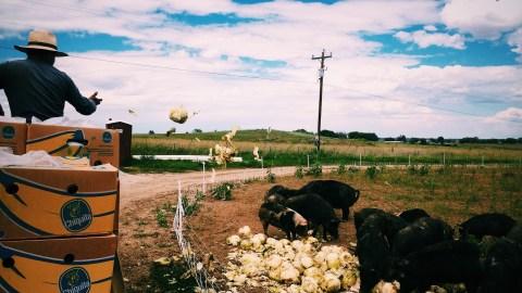 Feeding time for the pigs on Eric Skokan's farm. (Photo: Doug Brown.)