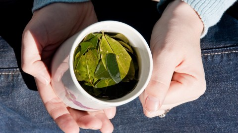 Coca leaves are often brewed as a tea to alleviate altitude-related sicknesses in Bolivia. (Photo: macjewell/Flickr.)