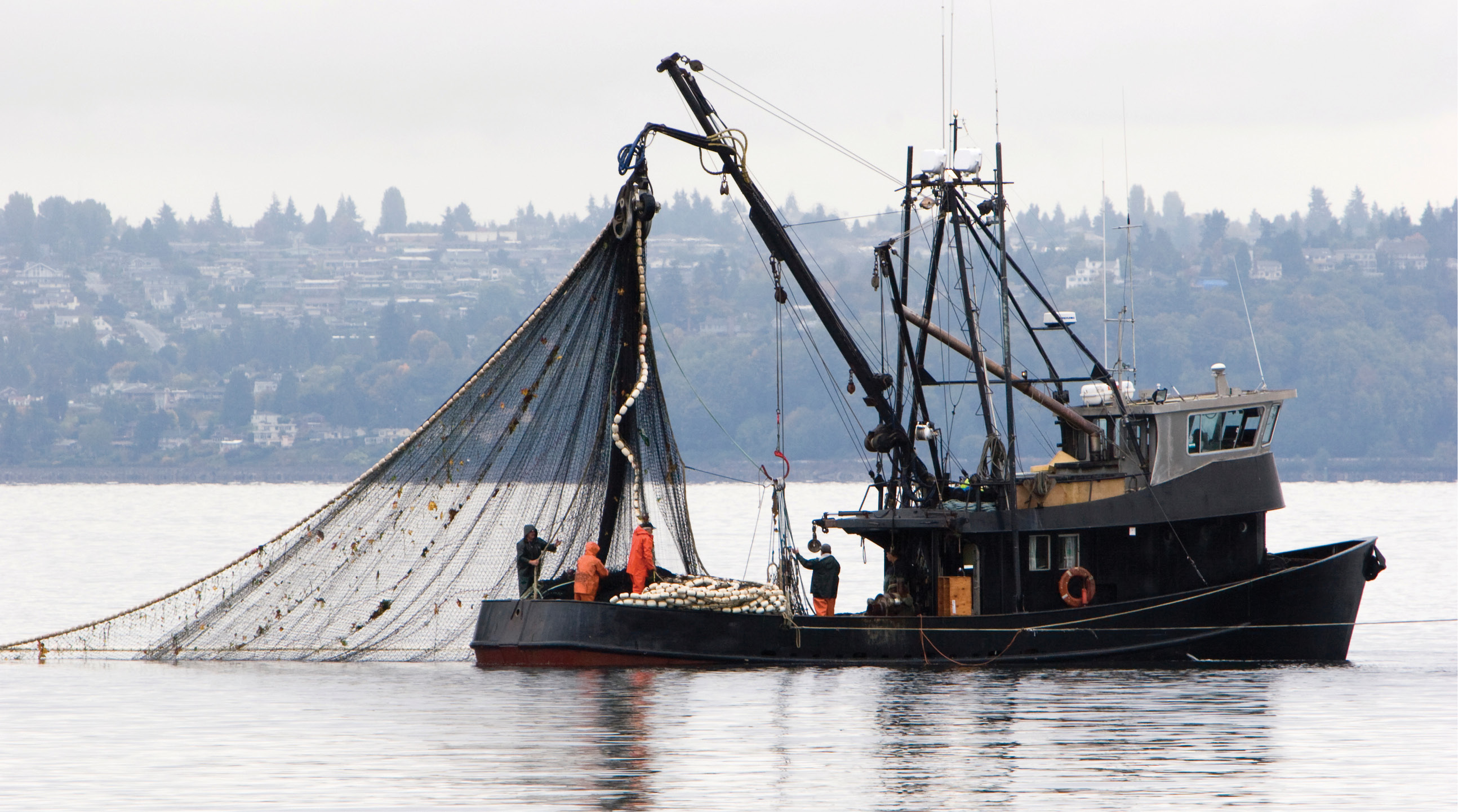 What Is Bycatch, And Which Fishing Methods Are Responsible? - Food