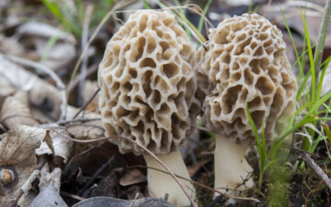 Michigan governor nixes bill to kill mushroom certification