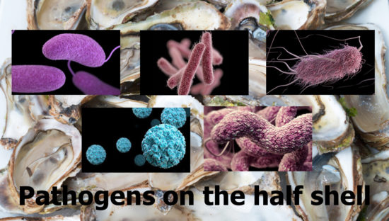 oysters pathogens on the half shell