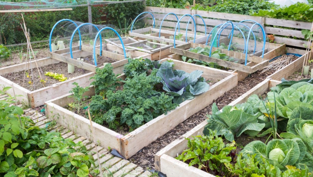 Study finds variation of lead uptake in fruits, veggies ... on Vegetable Garden Ideas For Backyard id=19895