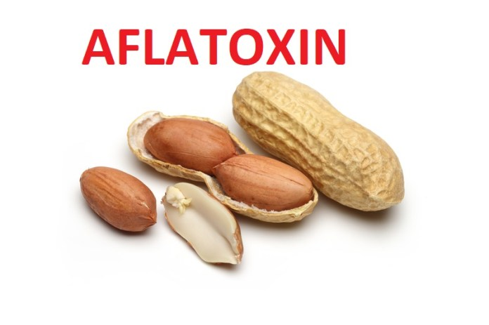 U.S. lacks sufficient aflatoxin checks on peanuts destined for Europe | Food Safety News