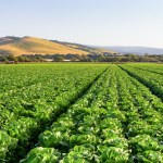 Canada imposes temporary import regulations for certain California romaine 💥👩👩💥