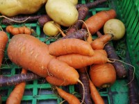 Carrot approach won't cut food waste, say MPs