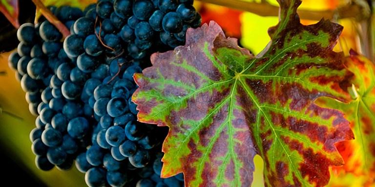 Wine/ A Genova torna il Festival Vin Natur