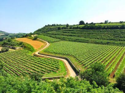 """Roma, 10 gen. (askanews) - Un anno positivo il 2017 per il vino Soave che, nonostante la complessità dal punto di vista agronomico ha visto crescere sia i valori dell'imbottigliato, che si attesta a 53 milioni di bottiglie di cui 13 milioni sono di Soave Classico, sia il prezzo dell'uva che è salito del 20%, testimoniando la buona salute della denominazione. Lo spiega in una nota Arturo Stocchetti, presidente del Consorzio, sottolineando che dati positivi arrivano anche dalle esportazioni, con conferme sui mercati storici e un aumento costante in paesi chiave per il Soave come il Giappone, il Canada e la Russia. """"L'export per il Soave assorbe quasi l'80% della produzione totale - conferma Aldo Lorenzoni, direttore del Consorzio – e le campagne promozionali che abbiamo portato avanti nel 2017 continueranno con il nuovo anno. Saremo infatti di nuovo a Londra a inizio marzo per una degustazione nella prestigiosa sede del WSET, mentre dopo Prowein voleremo negli Stati Uniti dove saremo protagonisti alla prima conferenza mondiale sui vini da terreni vulcanici. A giugno infine torneremo in Giappone dove riproporremo la campagna by the glass che ogni anno registra numeri sempre più importanti. Appuntamenti che si aggiungono alle fiere più importanti di settore come Vinitaly e Prowein, e le 2 """"classiche"""" Soave Preview dal 18 al 20 maggio e il Soave Versus dal 1 al 3 settembre""""."""