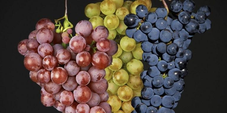 Wine/ Primitivo di Manduria, la prima volta a Roma