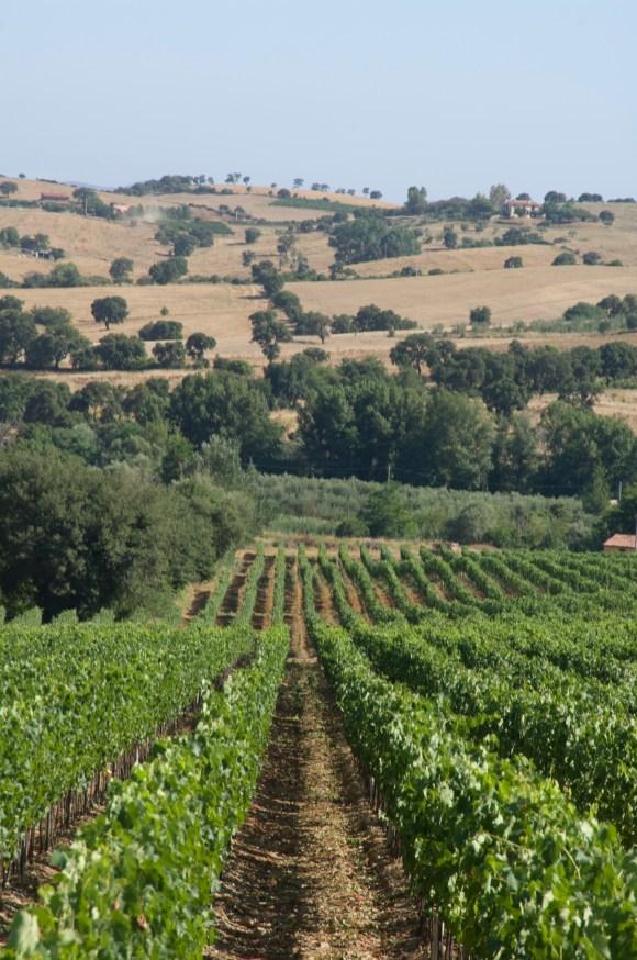 DOC Maremma Toscana 5